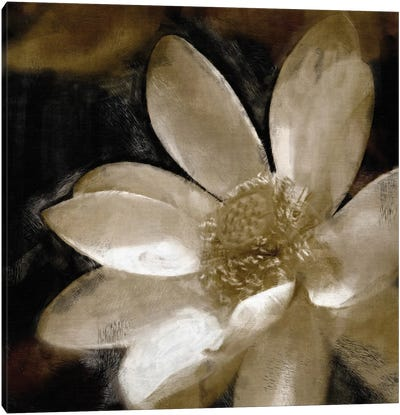 Bronze Lily Canvas Art Print