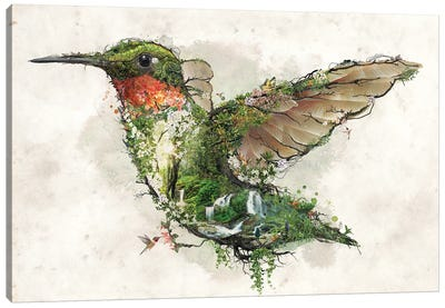 Ruby Throated Hummingbird Canvas Art Print
