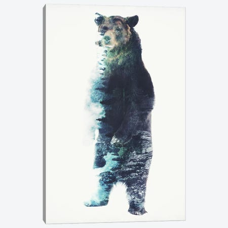 Misty Bear Canvas Print #BBI66} by Barrett Biggers Canvas Art