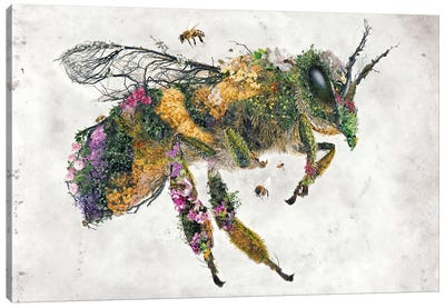 Must Bee The Honey Canvas Art Print