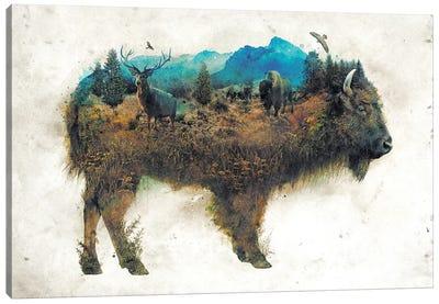 Surreal Bison Canvas Art Print