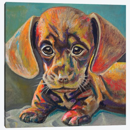 Puppy Face Canvas Print #BCM17} by Andy Beauchamp Canvas Art