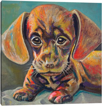 Puppy Face Canvas Art Print