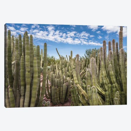 Cactus Garden Canvas Print #BCP10} by Bill Carson Photography Canvas Art