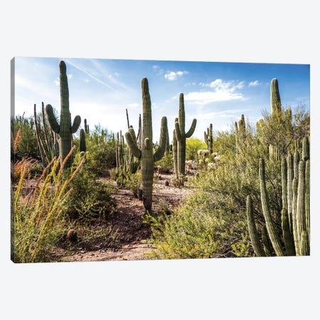 Into the Desert Canvas Print #BCP21} by Bill Carson Photography Canvas Print
