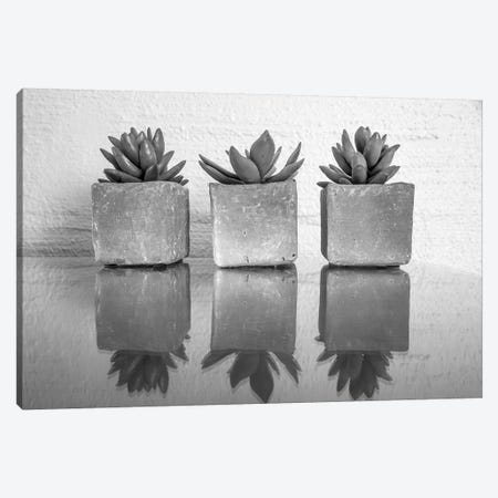 Potted Succulent 3-Piece Canvas #BCP27} by Bill Carson Photography Canvas Art