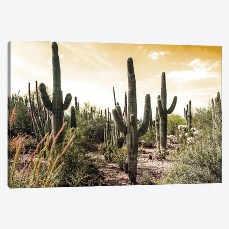 Cactus Field Under Golden Skies Canvas Print #BCP46} by Bill Carson Photography Canvas Artwork