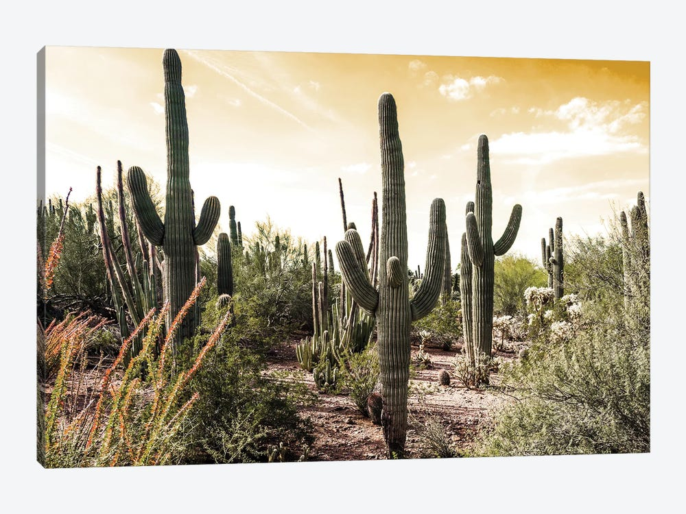 Cactus Field Under Golden Skies by Bill Carson Photography 1-piece Art Print