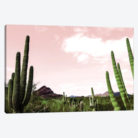 Cactus Landscape Under Pink Sky Canvas Print #BCP47} by Bill Carson Photography Canvas Wall Art