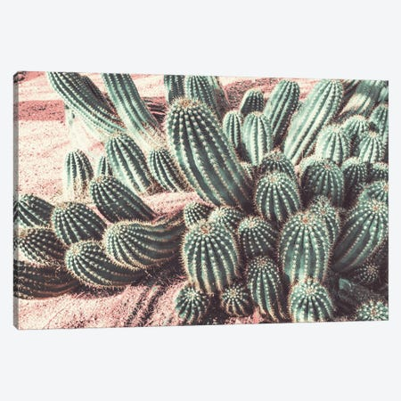 Cactus Muted Burst Canvas Print #BCP48} by Bill Carson Photography Canvas Print