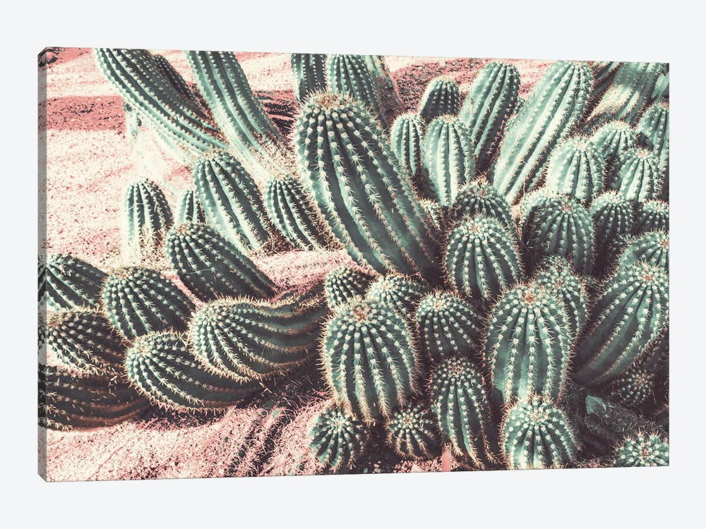 Cactus Muted Burst by Bill Carson Photography 1-piece Canvas Print