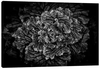 Black And White Flower Cabbage Canvas Art Print