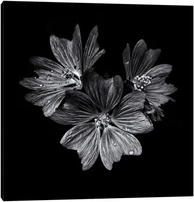 Black And White Flower Trio Canvas Art Print