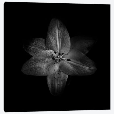 Black And White Lily Canvas Print #BCS20} by Brian Carson Canvas Art
