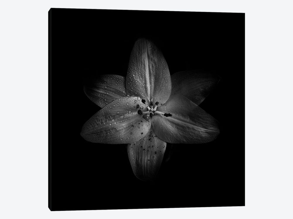 Black And White Lily by Brian Carson 1-piece Canvas Print