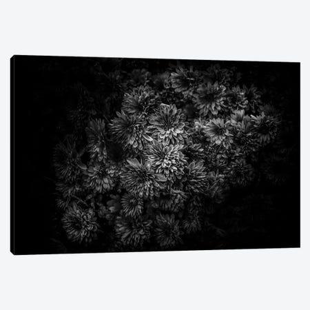 Black And White Mum Bouquet Canvas Print #BCS21} by Brian Carson Canvas Art