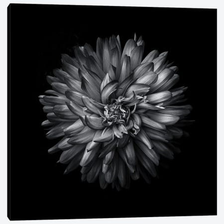 Black And White Mum I Canvas Print #BCS22} by Brian Carson Canvas Artwork