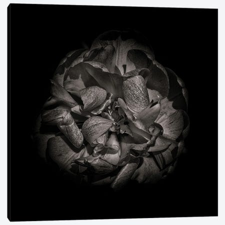 Black And White Peony I Canvas Print #BCS27} by Brian Carson Art Print
