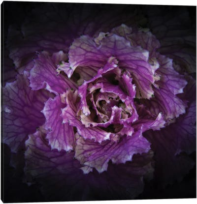Flowering Cabbage Canvas Art Print