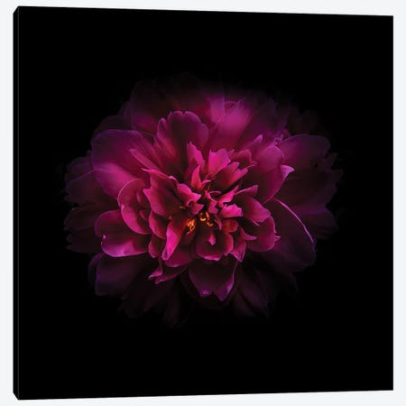 Red Peony Canvas Print #BCS55} by Brian Carson Canvas Wall Art