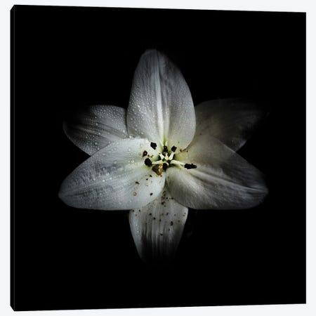 White Lily Canvas Print #BCS65} by Brian Carson Canvas Art Print