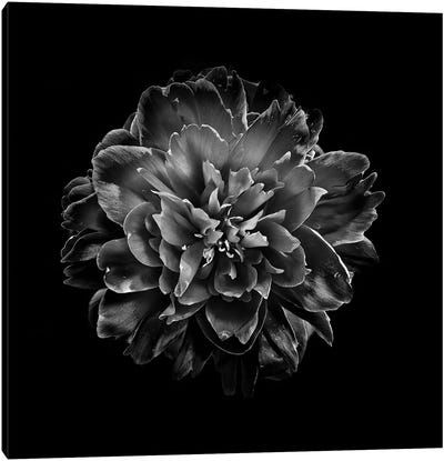 Black And White Camelia IV Canvas Art Print