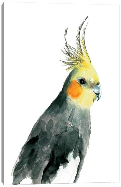 Cockatiel II Canvas Art Print