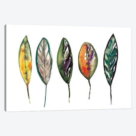Feathers Canvas Print #BCV17} by Albina Bratcheva Art Print
