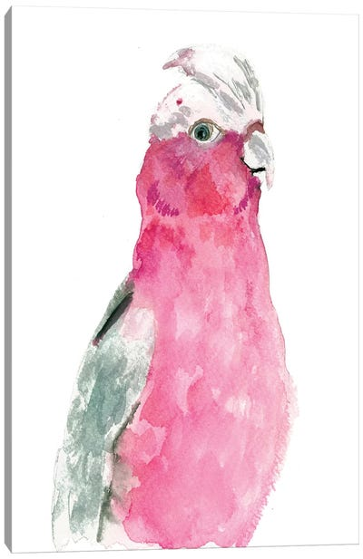 Fuschia Feathers Canvas Art Print
