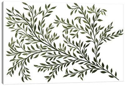 Sage Canvas Art Print