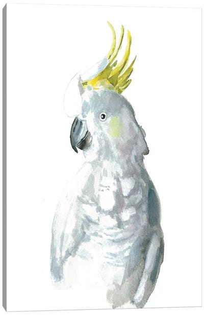 Cockatiel I Canvas Art Print