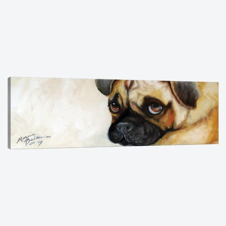 Cutie Pie Pug Canvas Print #BDN22} by Marcia Baldwin Canvas Artwork