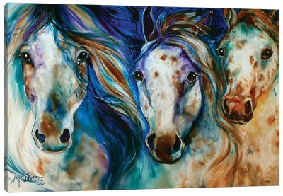 3 Wild Appaloosa Horses Canvas Art Print
