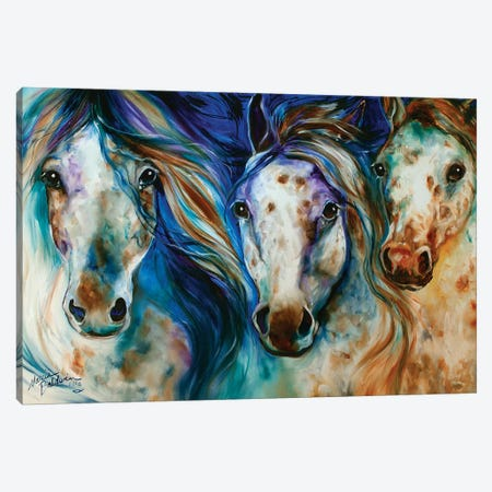 3 Wild Appaloosa Horses Canvas Print #BDN2} by Marcia Baldwin Canvas Wall Art