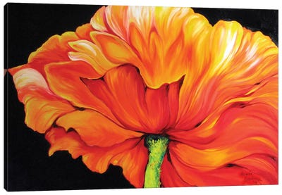 A Single Poppy Canvas Art Print
