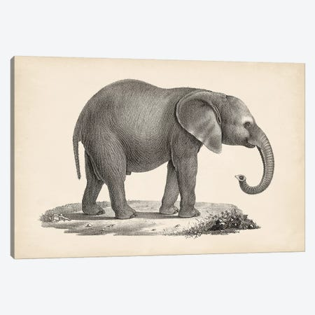Brodtmann Young Elephant Canvas Print #BDT10} by Brodtmann Canvas Art Print