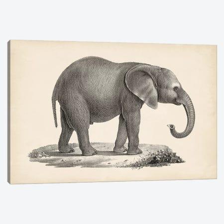 Brodtmann Young Elephant Canvas Print #BDT10} by Brodtmann Canvas Art Print