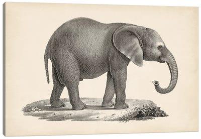 Brodtmann Young Elephant Canvas Art Print
