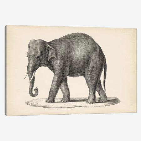 Brodtmann Elephant Canvas Print #BDT3} by Brodtmann Art Print