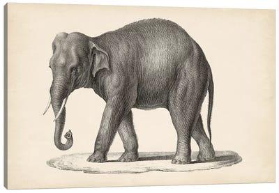 Brodtmann Elephant Canvas Art Print
