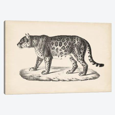 Brodtmann Female Leopard Canvas Print #BDT4} by Brodtmann Canvas Art