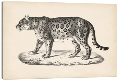 Brodtmann Female Leopard Canvas Art Print