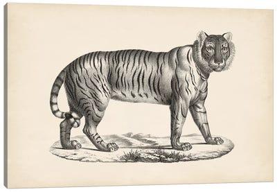Brodtmann Female Tiger Canvas Art Print