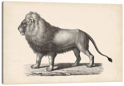 Brodtmann Lion Canvas Art Print