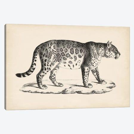 Brodtmann Male Leopard Canvas Print #BDT7} by Brodtmann Canvas Artwork