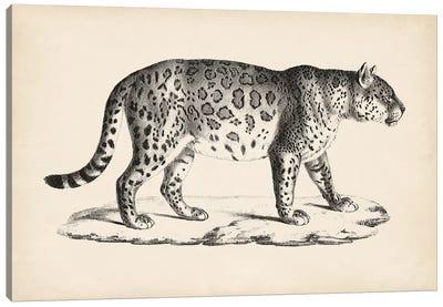 Brodtmann Male Leopard Canvas Art Print