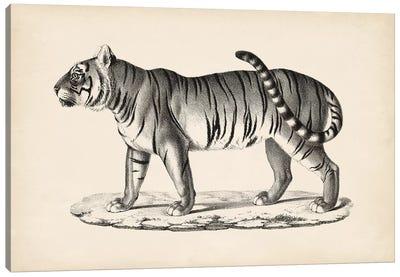 Brodtmann Male Tiger Canvas Art Print