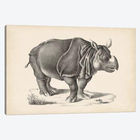 Brodtmann Rhinoceros 3-Piece Canvas #BDT9} by Brodtmann Canvas Art Print