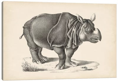 Brodtmann Rhinoceros Canvas Art Print