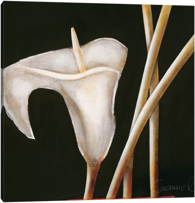 Lily In Sepia I Canvas Art Print